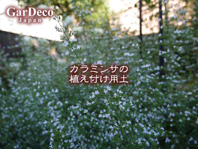 カラミンサ(カラミント)の植え付け用土