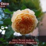 クラウンプリンセスマルガリータがぽつりと開花。
