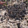 籾殻マルチをどけたら土が団粒構造になっていた。