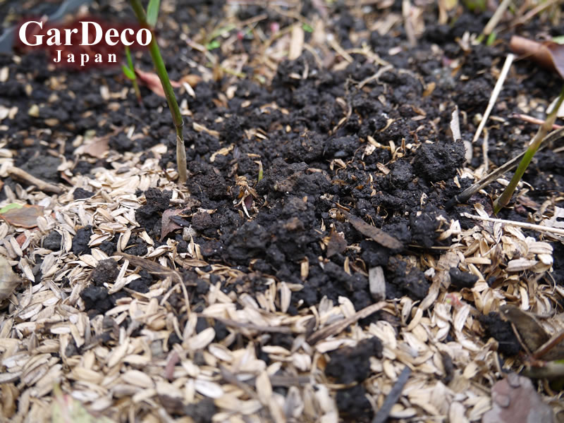 籾殻(もみがら)のマルチングをどけたら土が団粒構造になっていました。