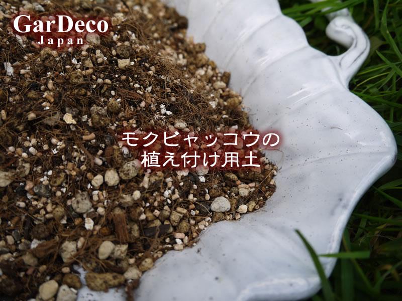 モクビャッコウの植え付け用土