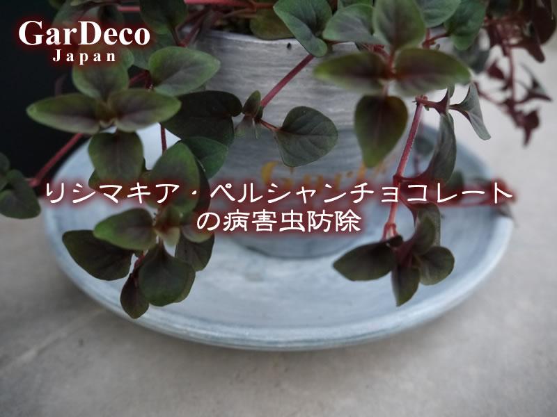 リシマキア・ペルシャンチョコレートの病害虫防除