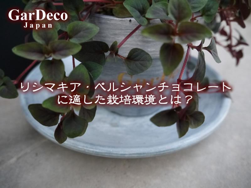 リシマキア・ペルシャンチョコレート(リシマキア・ペルシアンチョコレート)に適した栽培環境とは?