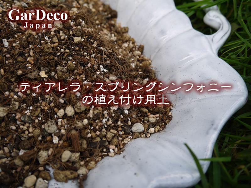 ティアレラ・スプリングシンフォニーの植え付け用土