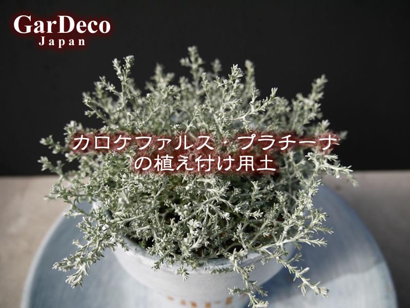 カロケファルス・プラチーナの植え付け用土