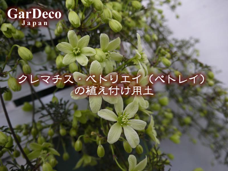 クレマチス・ペトリエイ(ぺトレイ)栽培に適した植え付け用土