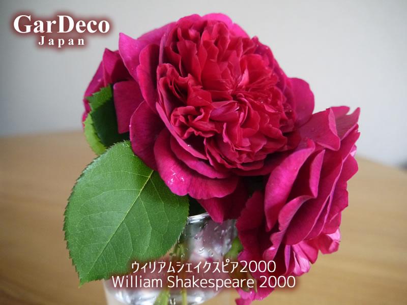 ウィリアムシェイクスピア2000の写真・画像