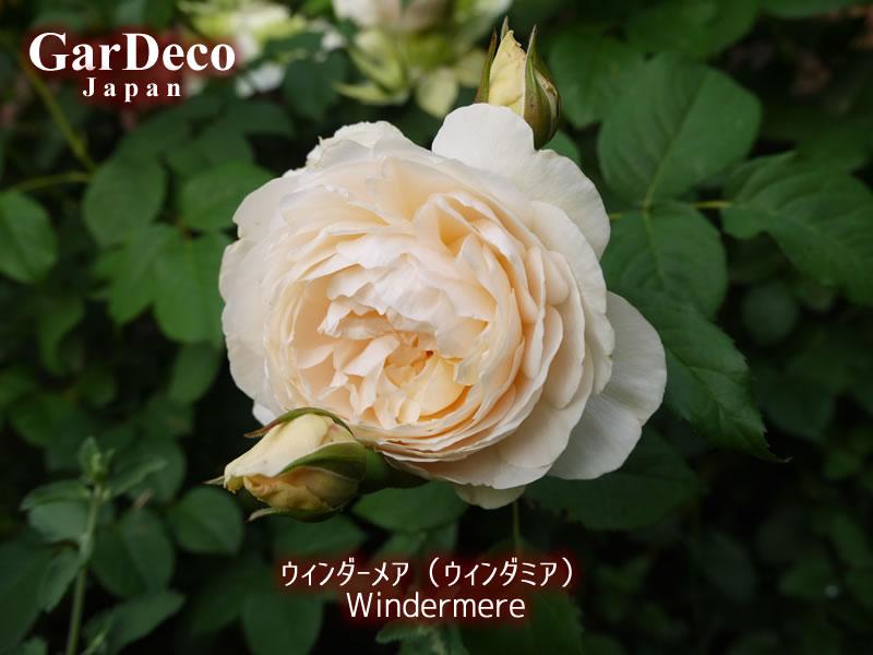 ウィンダーメア(ウィンダミア)の写真・画像