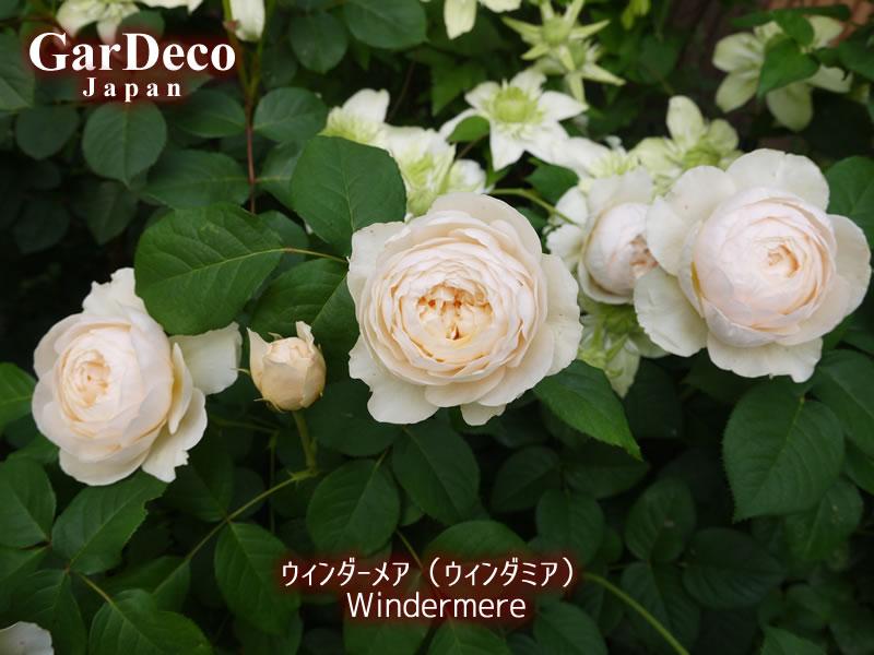 ウィンダーメアの写真・画像