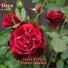フランシスデュブリュイのサイドシュートの先に咲いた花、その後。