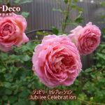 ジュビリーセレブレーションのベーサルシュートの先に咲いた花。