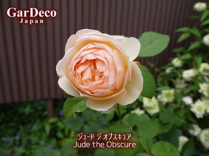 ジュードジオブスキュア(Jude the Obscure)
