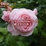 ナエマ( Nahema )の植え付け用土