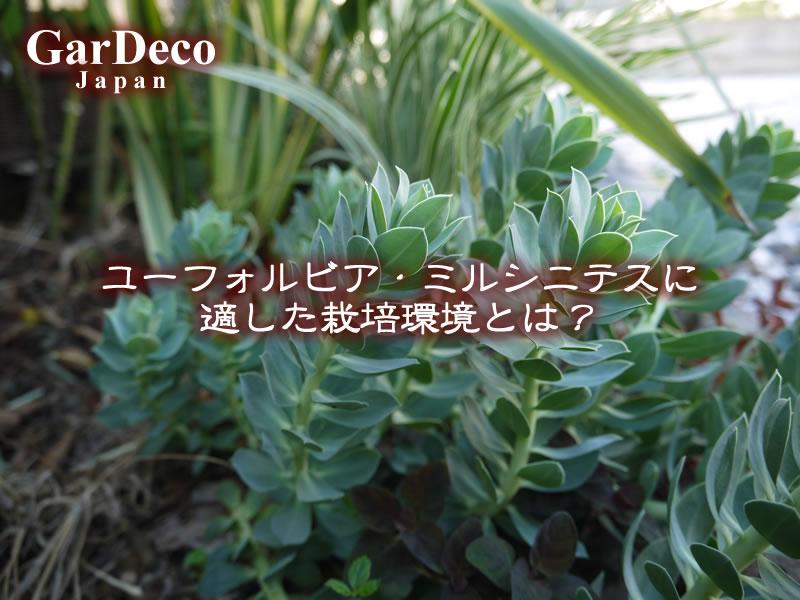 ユーフォルビア・ミルシニテスに適した栽培環境とは?