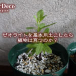 ゼオライトを基本用土にしたら植物は育つのか?