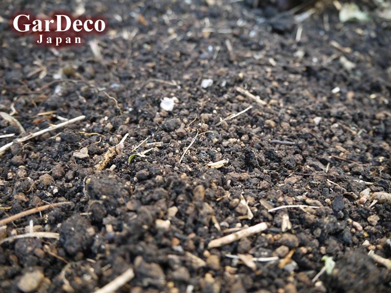 剪定枝マルチングの下は団粒構造の土でした。