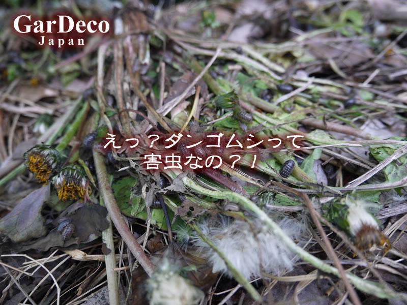 えっ?ダンゴムシって害虫なの?!