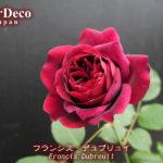 2018年、一番最初に咲いたバラは…?
