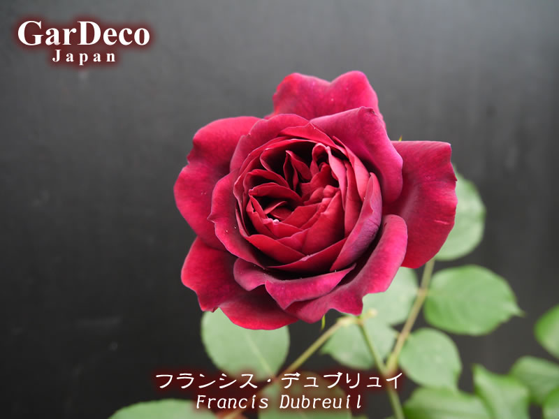 フランシスデュブリュイ( Francis Dubreuil )