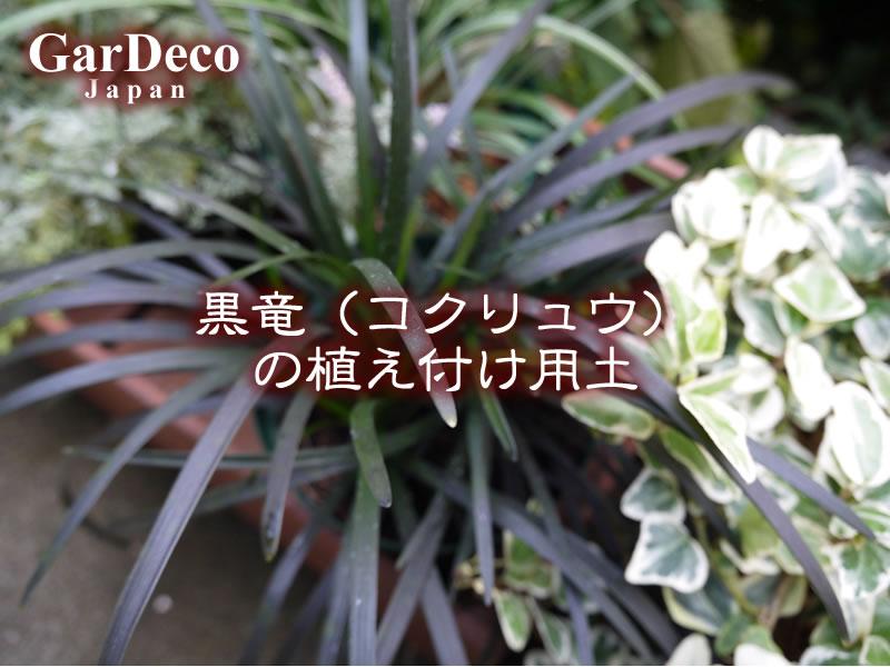 黒竜(コクリュウ)の植え付け用土