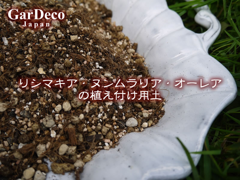 リシマキア・ヌンムラリア・オーレアの植え付け用土