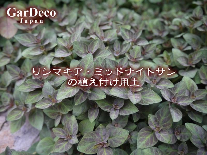 リシマキア・ミッドナイトサンの植え付け用土