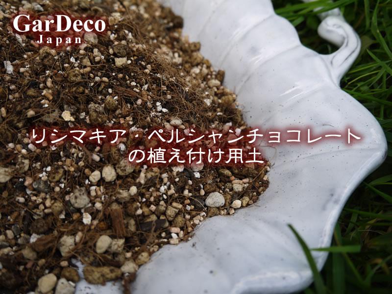 リシマキア・ペルシャンチョコレートの植え付け用土