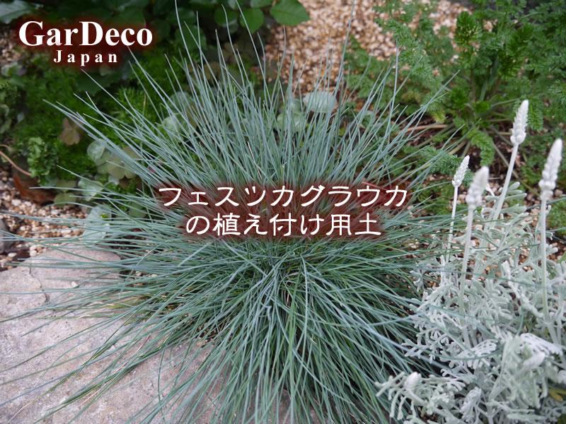 フェスツカグラウカの植え付け用土