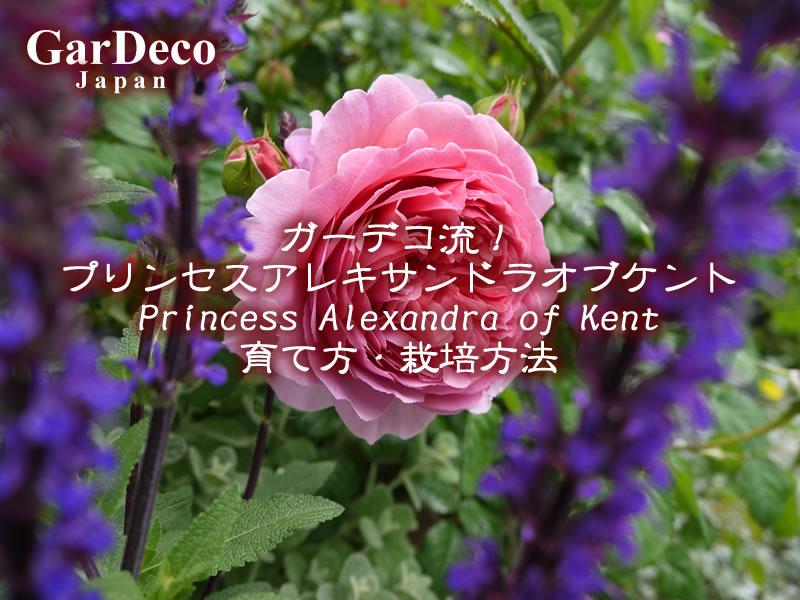 ガーデコ流!プリンセスアレキサンドラオブケントの育て方・栽培方法